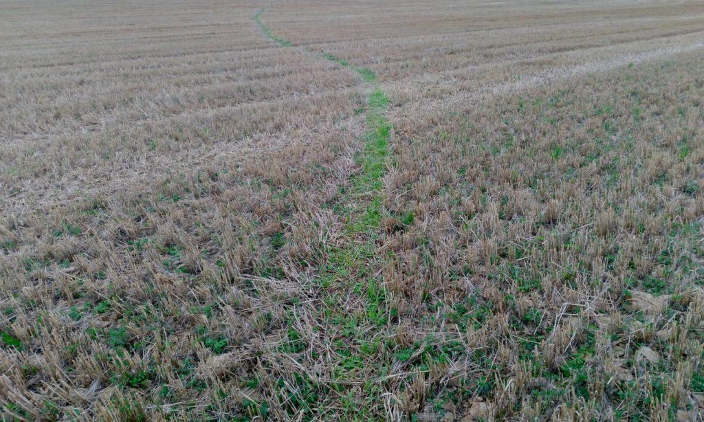 Green path through a brown field
