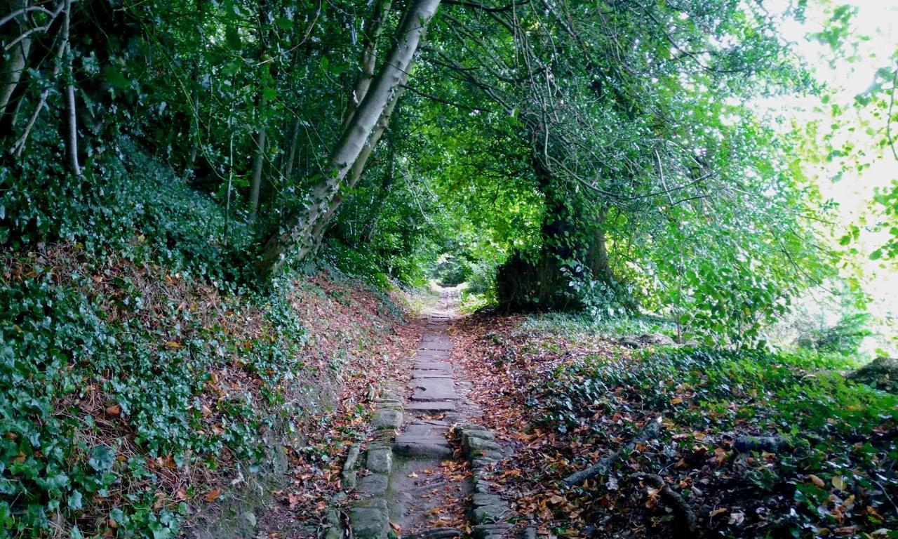 A lush old track in Dyrham